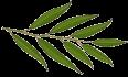 Willow_Worx_leaf